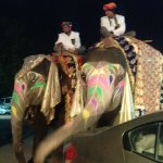 elephants at the wedding outside Spice Court
