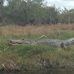 Gator on the bank