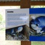 Foto di Oamaru Blue Penguin Colony