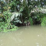 Canal tour / dense jungle