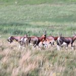 Glen Garriff Conservation
