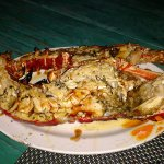 deliciously grilled lobster