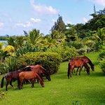 Turquoise Bay Dive & Beach Resort ภาพถ่าย