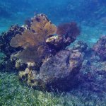 lots to see at the reef
