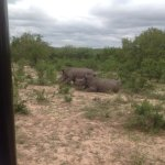 Poachers will be de-horned. Rehabilitated Rhinos