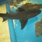 Shark petting tank