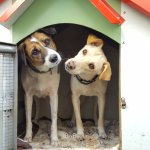 """Our dogs - discovering that """"Mum and Dad"""" don't ever want to leave Lux Belle Mare"""