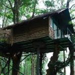 Tree house out look