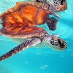 Sea Turtle Clinic