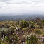 View from Mount Kenya moorlands hike.
