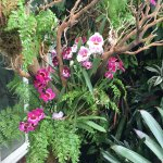 Foto de Conservatory of Flowers