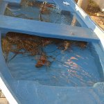 the lobster boat...fresh lobster