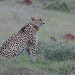 Amakhala Game Reserve Foto