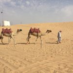 Photo of Abu Dhabi Desert Safari -Day Tours