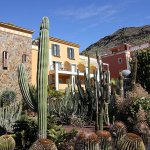 Le petit jardin de cactus à côté du spa.