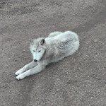 Foto de Colorado Wolf and Wildlife Center