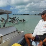 Pelicans having a snack. Caribean Adventures is a great choice!