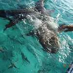 They sharks at Mexico Pocks. Caribean Adventures is a great choice!