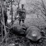 Tortoises roam free & they are probably the happiest that I saw
