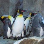 The Calgary Zoo Foto