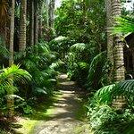 Garden's alley