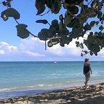 Nice beach with plenty of Palm trees