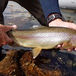 Fishinglife Foto