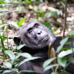 Kibale National Park Foto