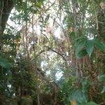 Biosphere 2 Εικόνα