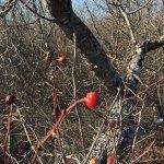 Photo de Parker River National Wildlife Refuge