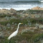 Spectacular scenery abounds when walking the trail from Pacific Grove to Asilomar