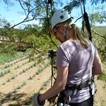 Toward the end of the zip lines, the blue agave plantations.