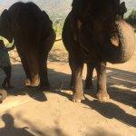 Photo de Woody Elephant Training