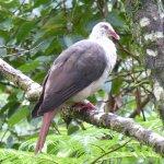 Photo of Nature Trails Mauritius