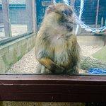 Foto di Monkey Haven
