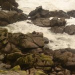 Stormy seas at the Fur Seal colony