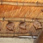 Bats in the belfry (?)