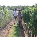 Riding thru a Vineyard