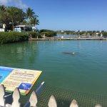 Photo of Hawks Cay Resort