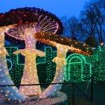 Zimowy Park światła