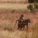 Photo de Bongo Safari- Day Tour