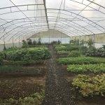 Orgainc on-site garden
