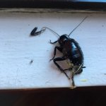 Roaches! Yuckie!