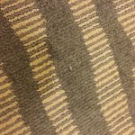 bugs on the carpet