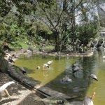 Bird Park lake