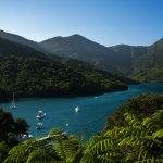 Punga Cove Resort Picture