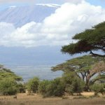 Early morning game drive with Best Camping Tours Kenya
