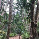 Photo of Jozani Chwaka Bay National Park