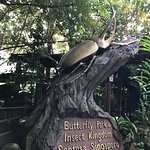 Photo of Butterfly Park & Insect Kingdom