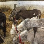 A lovely little sanctuary for some old donkeys.